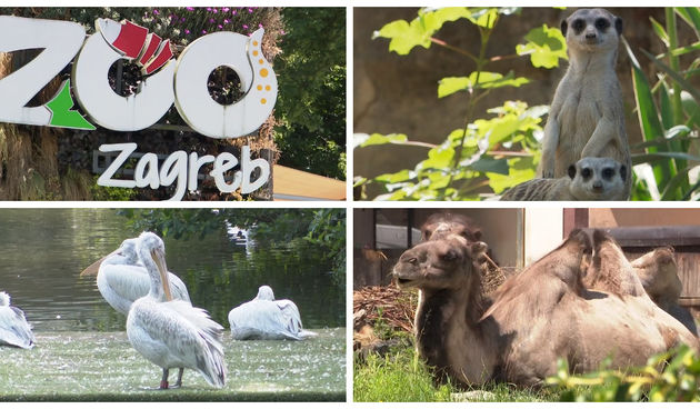 Zagrebački Zoološki vrt slavi 95. rođendan: Znate li kojih sve životinja tamo ima?