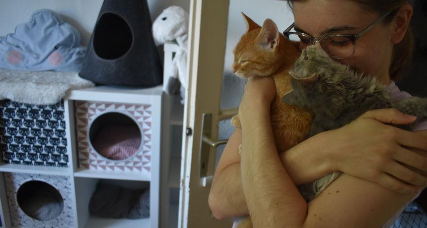 Tri studentice godinama rješavaju problem napuštenih životinja, trenutno su na rubu: 'Muči nas pitanje 'spasiti život ili ne?'