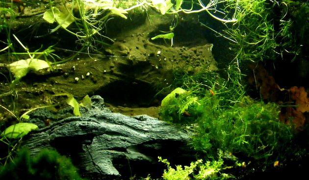 Biljni akvarij
