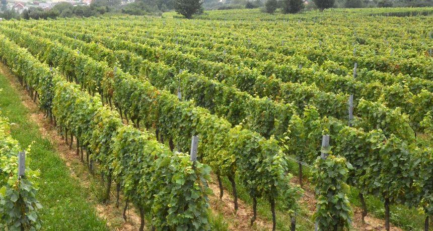 VINSKA PREVARA KOD SUSJEDA Poduzetnik prevario vinara za 278.000 kuna i pobjegao u Irsku