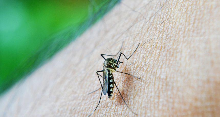 Komarci ih ne podnose: Ove biljke otjerat će insekte