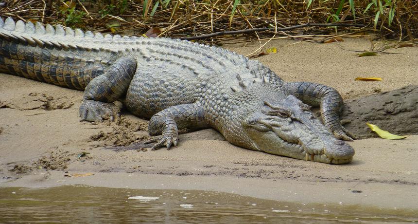 Drama na rijeci: Dječak je plivao, a krokodil ga je cijelog progutao. No, tu nije kraj priče...