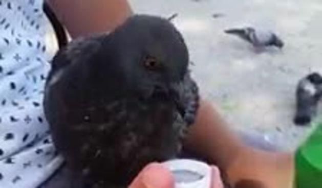 'Da si barem svi klinci takvi': snimka dječaka koji daje vodu golubu na Tomislavcu raznježila Zagrepčane (thumbnail)