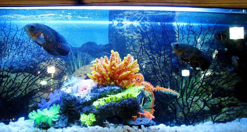 Mjesto za akvarij