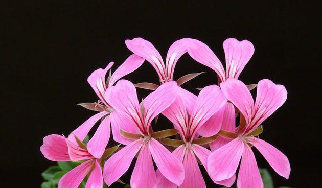 Cvijeće ljetnice: ovo je idealno cvijeće za vaš ljetni vrt