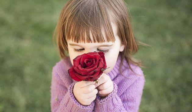 Njuh, miris, dijete, ruža