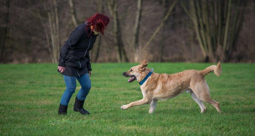Novo vrijeme: Ljudi više vole svoje pse, nego druge ljude i radije se s njima druže