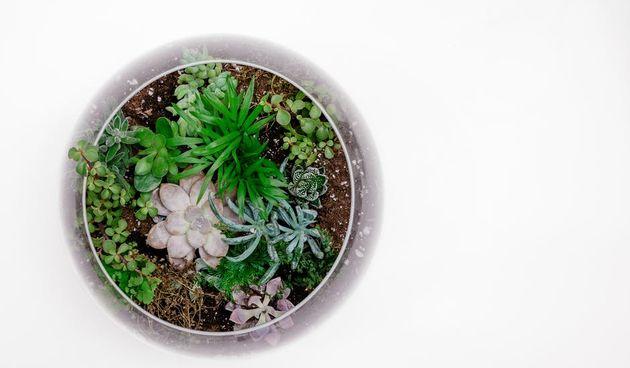 Podloga u biljnom akvariju