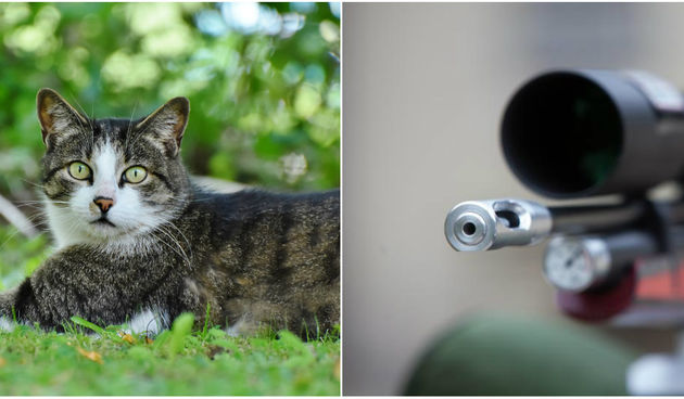 Mačka, zračna puška