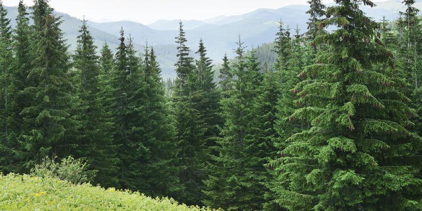 Koje vrste drveća postoje i po čemu se razlikuju?
