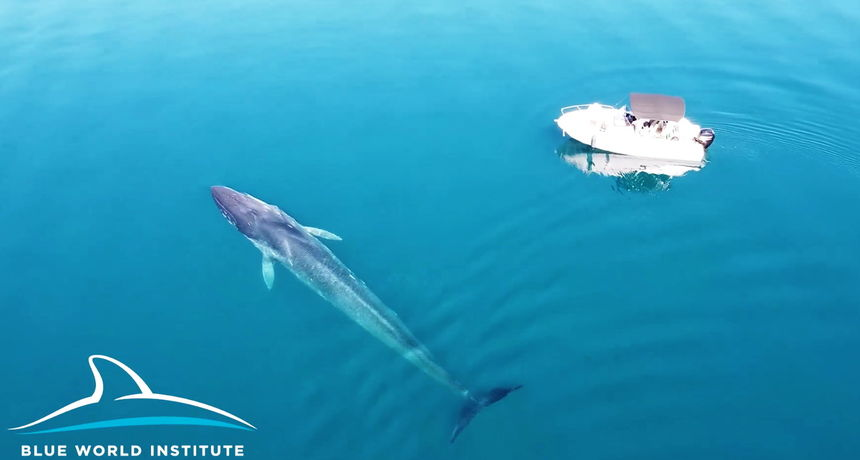 Pogledajte fascinantnu snimku kita u Velebitskom kanalu