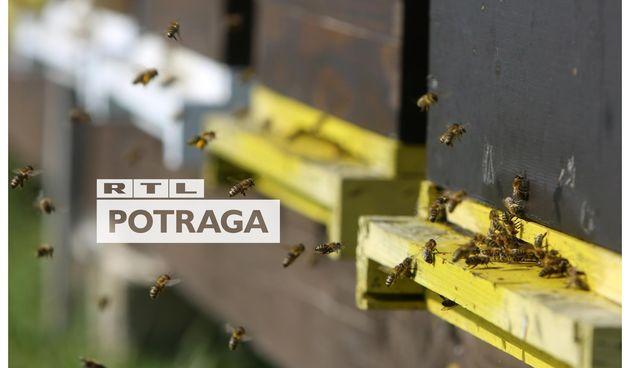 Potraga, pčele