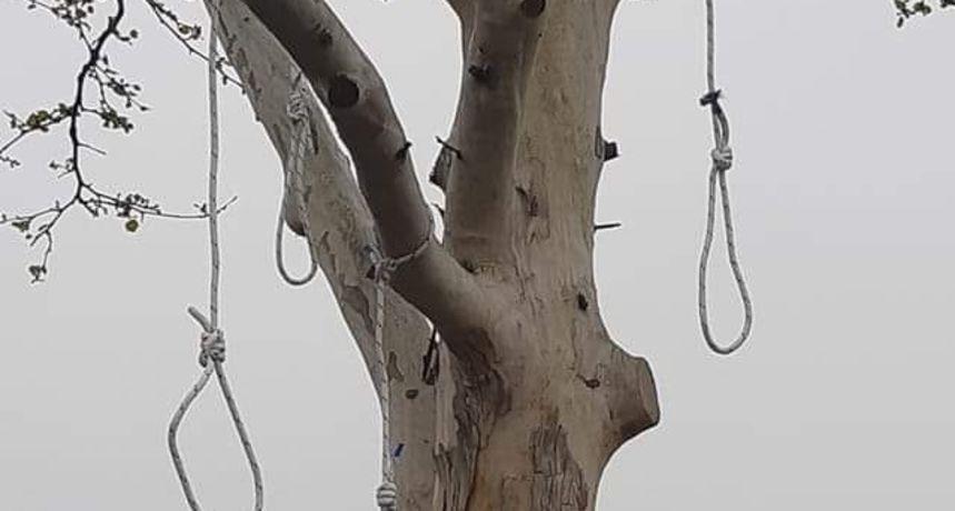 Četiri omče njišu se s grana stabla u Dubravi, policija odjurila istražiti o čemu je riječ