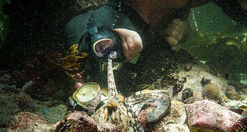 My Octopus Teacher + The Trial of the Chicago 7: Životne lekcije iz prirode i povijesti