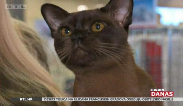 Svjetska izložba mačaka održana u Zagrebu (thumbnail)