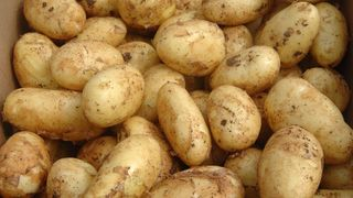 mladi krumpir