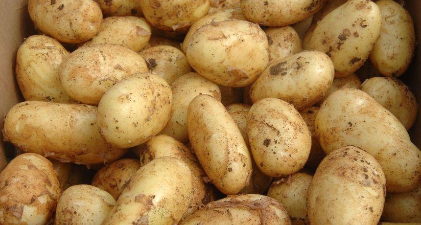 S tržišta povlače opasno zatrovan krumpir iz uvoza, otrov su nedavno otkrili i u krastavcima. Ovo su osnovne informacije