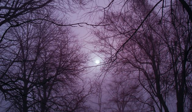 misterij, noć, magla