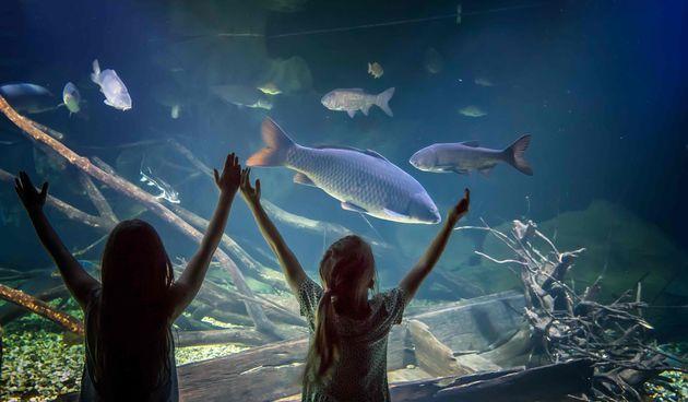 Zavirite u čudesan riječni svijet – posjetite karlovački slatkovodni akvarij s obitelji kad god poželite!