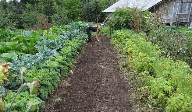 Još uvijek stignete postati vrtlar - vrijeme i prostor nisu prepreka, pogledajte kako početi!