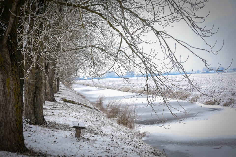 Zimska idila u Kopačkom ritu