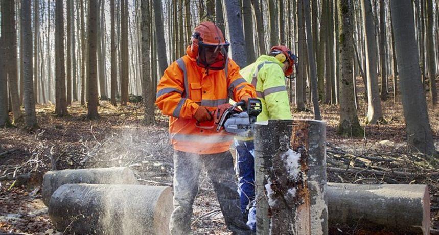 Karlovačka policija završila istragu velike krađe drva iz državne šume - osumnjičeni djelatnici Hrvatskih šuma, ima i visokopozicioniranih
