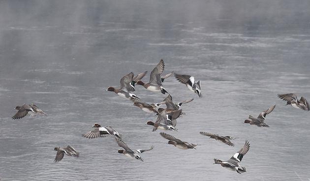 FOTO GALERIJA Hladno jutro na rijeci Kupi - Karlovac, 1. prosinca 2020.