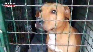 Psi koji su izgrizli ženu u zagrebačkoj Dubravi (thumbnail)
