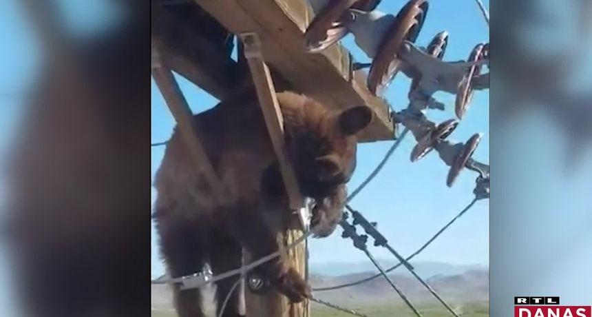 VIDEO Medo se popeo na stup dalekovoda i zaglavio. Pogledajte kako su ga spasili da ga ne ubije struja