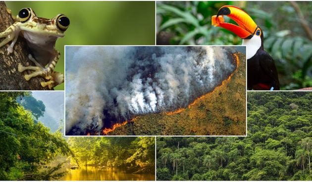 Zanima vas zašto su požari u Amazoni ozbiljni za cijeli svijet? Nakon ovih činjenica sigurno ćete shvatiti!