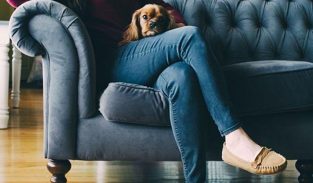 Kauč, žena, pas