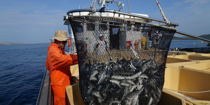 Novi veliki uspjeh Cromarisa u uzgoju riba