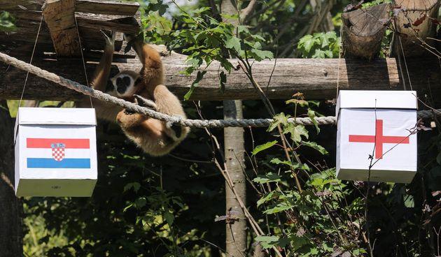 Majmun Kent