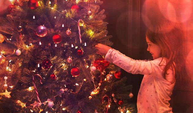 Kako izabrati kvalitetno i lijepo božićno drvce? Odgovor ima hrvatski doktor za drveće