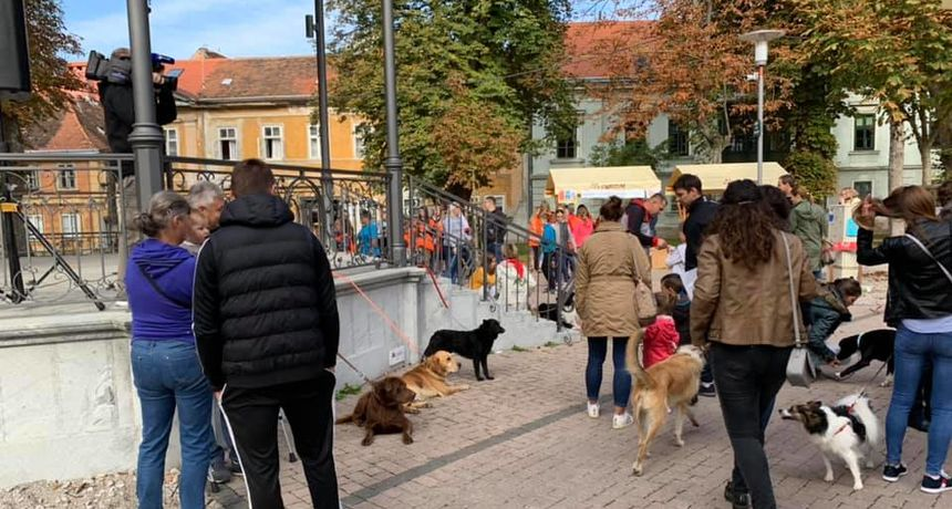 Naredne subote tradicionalni izbor za najmješanca grada Karlovca posvećen psu Kini - prijave još samo danas i sutra