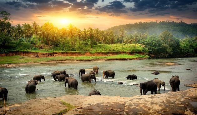 Smanjene svjetske populacije vrsta