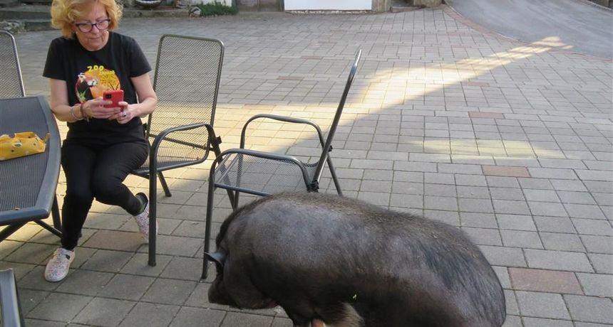 Neobični kućni ljubimac već 13 je godina član obitelji Frković u Ogulinu - zove se Ružica, ali je muško!