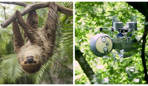 Ljenjivac/SlothBot