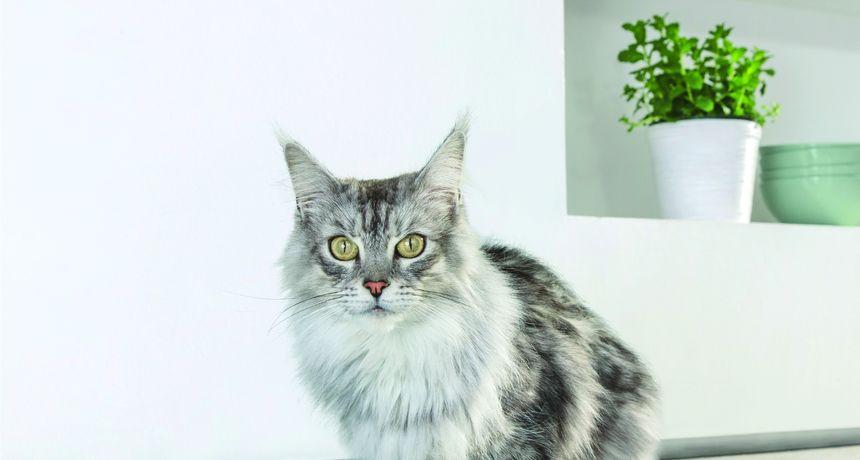 Što imaju zajedničko ljudi i mačke? I jedni i drugi moraju raditi na jačanju svog imuniteta