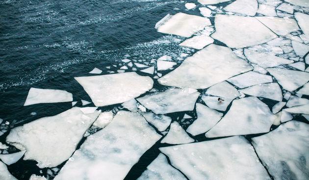 Arktik led