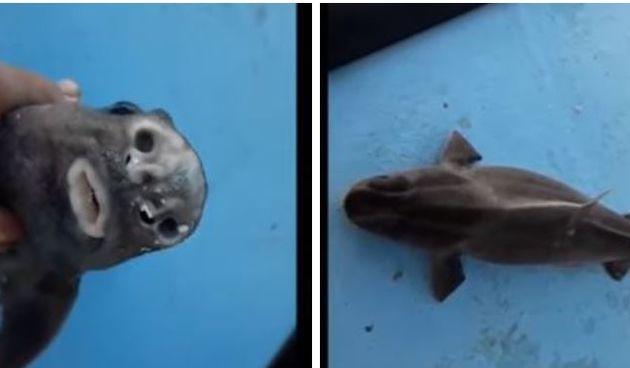 Kod Paga ribar uhvatio morskog psa prasca: 'Ovo nisam vidio skoro 40 godina'