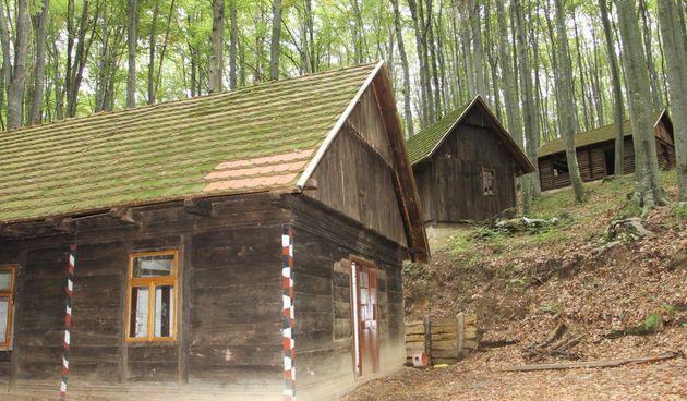VIDEO Zaboravljena usred šume: Partizanska bolnica na Petrovoj gori već desetljećima propada, no HDZ-ov načelnik Vojnića je planira obnoviti