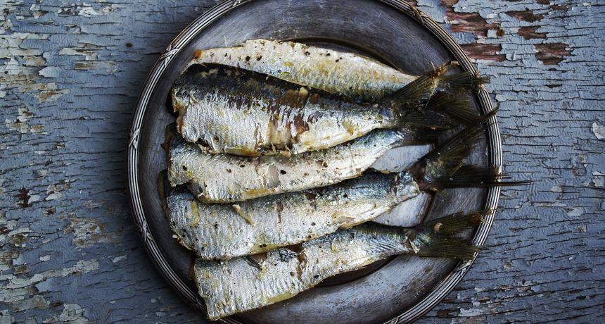 Konzervirana riba kao zdrav i ekološki održiv izvor proteina
