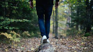 šuma, šetnja