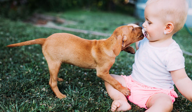 Beba i pas