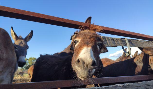 dar-mar magarci damir štulina farma magaraca