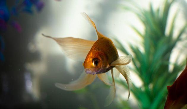 Biljke za akvarij