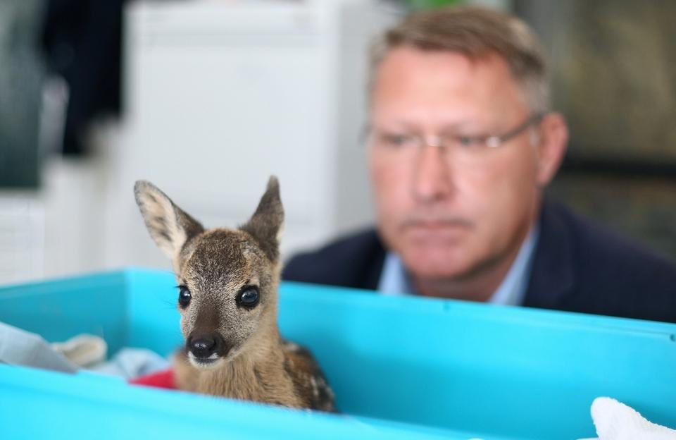 Malo i krhko lane ozlijeđeno prilikom košnje: Trenutno se oporavlja u Zoološkom vrtu Zagreb