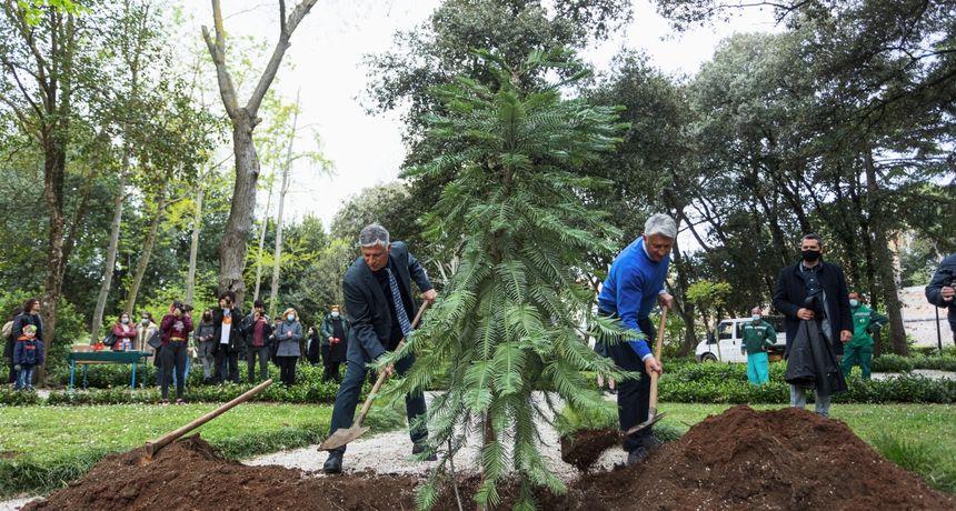 Eko dani Prirodoslovno-grafičke škole: Posađeno stablo australskog stribora, vrste koja je rasla s dinosaurima