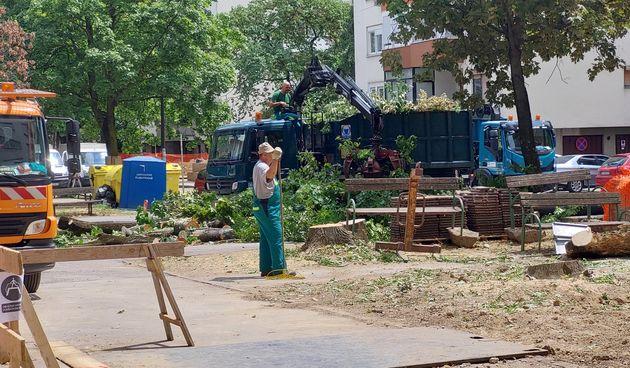 Sječa stabala u zagrebačkom kvartu Srednjaci